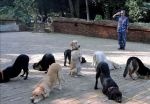 Dogs to attention