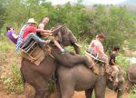 randy elephants