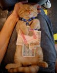 cat on back with money
