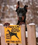 dog sign believe in life after death jump fence to find out