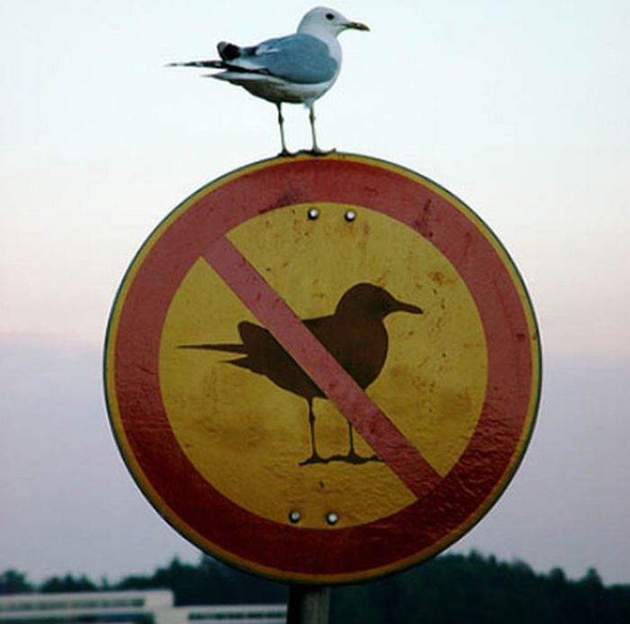 bird on no birds sign