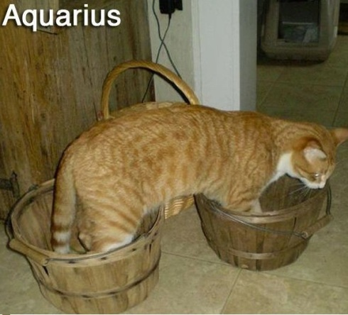 AQUARIUS - Funny Zodiac Cat Photos (11)