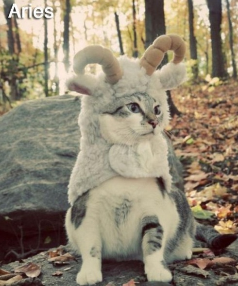 ARIES - Funny Zodiac Cat Photos (1)