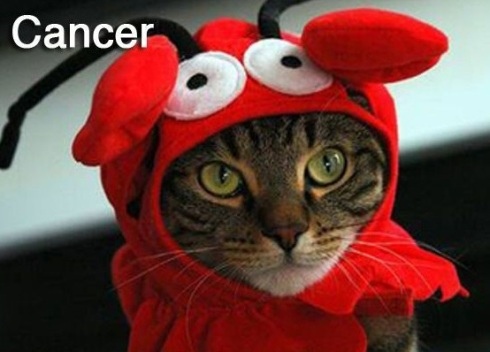 CANCER - Funny Zodiac Cat Photos (4)