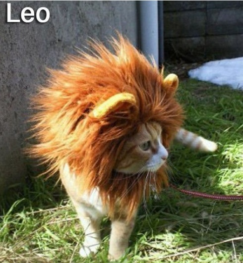 LEO - Funny Zodiac Cat Photos (5)