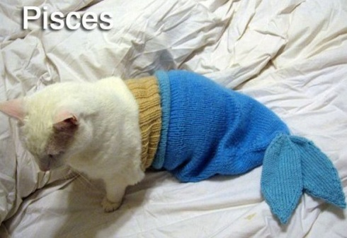 PISCES - Funny Zodiac Cat Photos (12)
