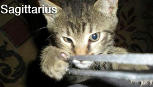 SAGITTARIUS -Funny Zodiac Cat Photos (9)
