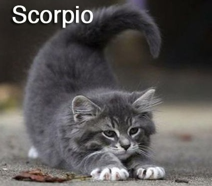 SCORPIO - Funny Zodiac Cat Photos (8)
