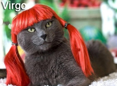 VIRGO - Funny Zodiac Cat Photos (6)